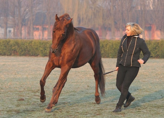 Woman training her horse to canter collectively
