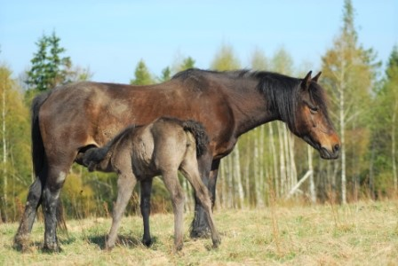 Retuerta horse from Spain