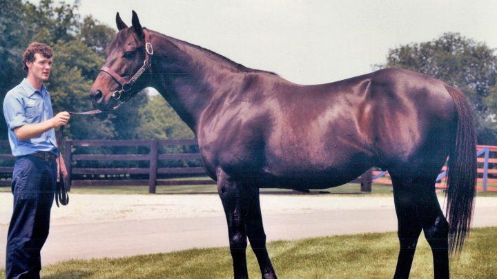 Seattle Slew, famous Triple Crown winning racehorse