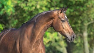 Facts about Thoroughbred horses