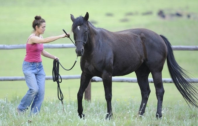 Woman doing natural horsemanship