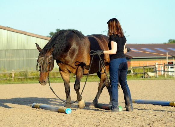 Woman training and teaching her horse in a ménage