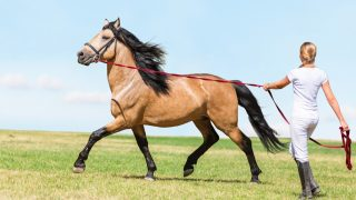 What is natural horsemanship? Woman training her horse by lunging in a natural way